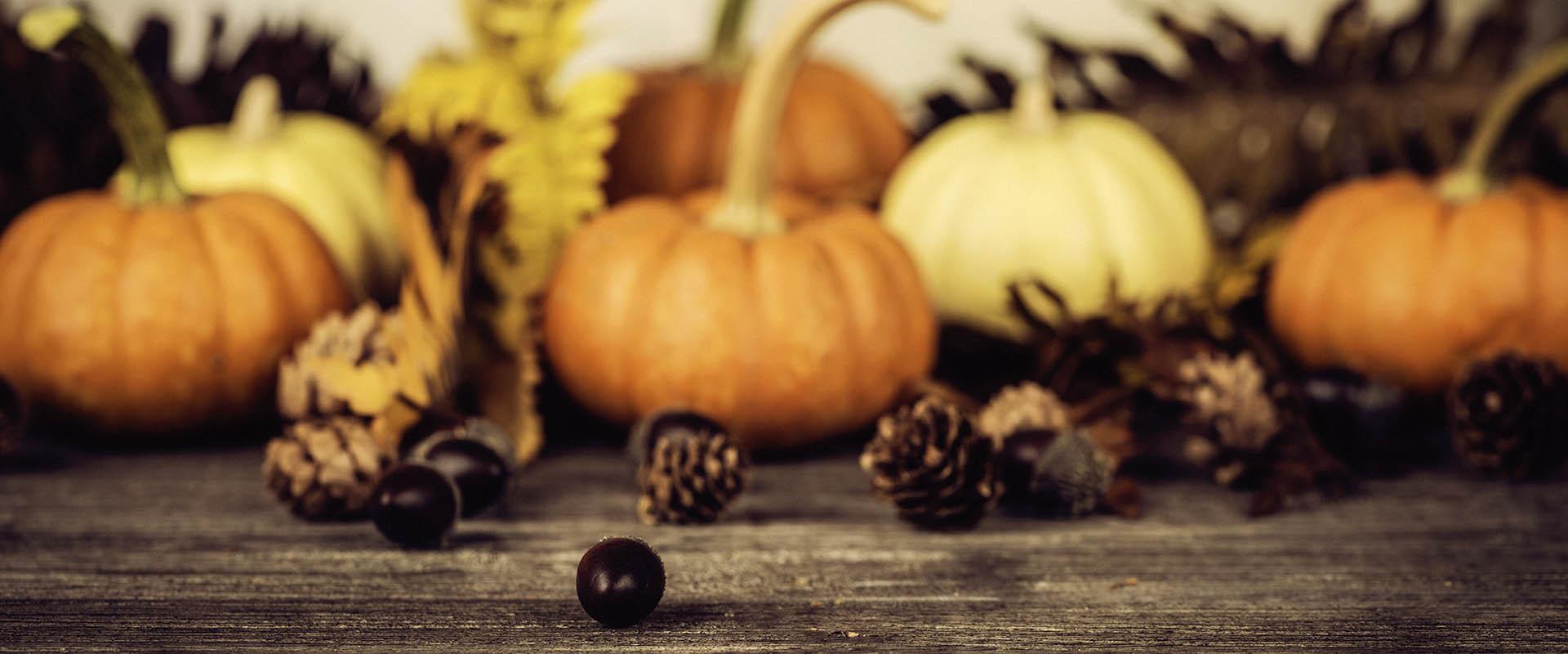 Mayer Thanksgiving